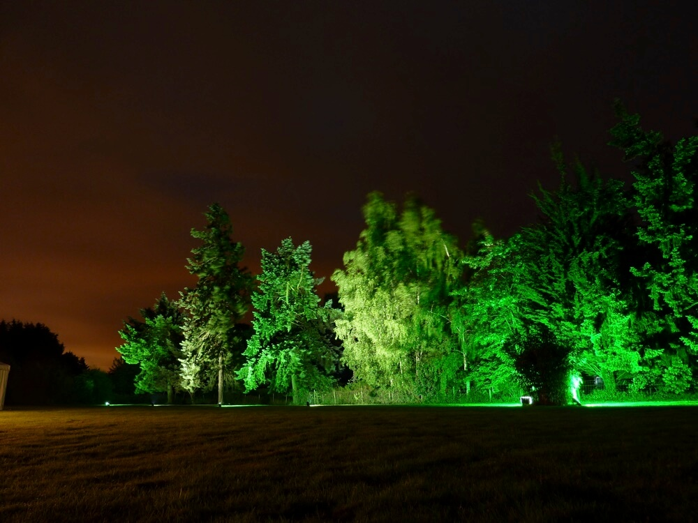 Uplighting Trees